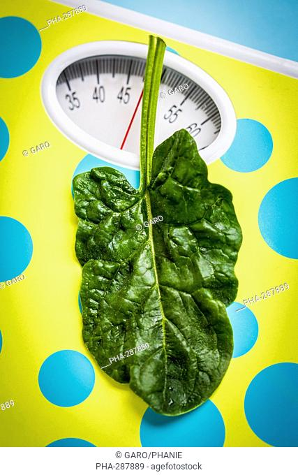 Spinach leaf on scales, dieting, conceptual image