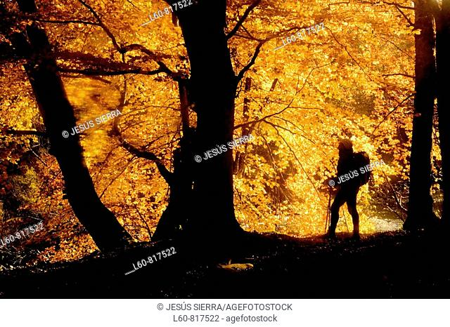 Autumn Irati, Navarre, Spain