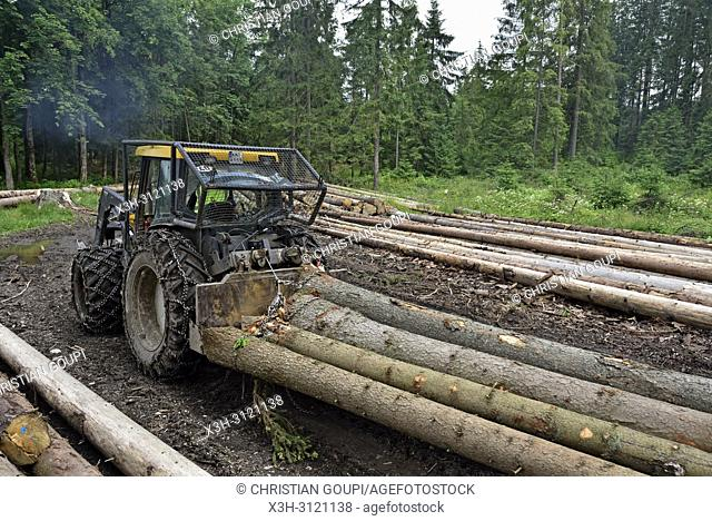 timber onloading, Chocholowska Valley, near Witow, Podhale Region, Polish Tatra mountains, Malopolska Province (Lesser Poland), Poland, Central Europe
