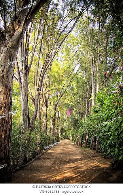 Tree Path in Galindo, Querétaro, MEXICO