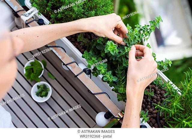 Woman checking herbs on balcony