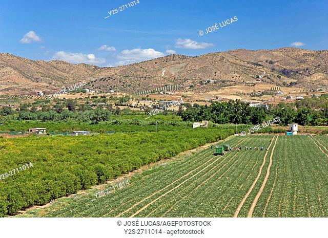 Guadalhorce Valley and crops, Cartama, Malaga province, Region of Andalusia, Spain, Europe