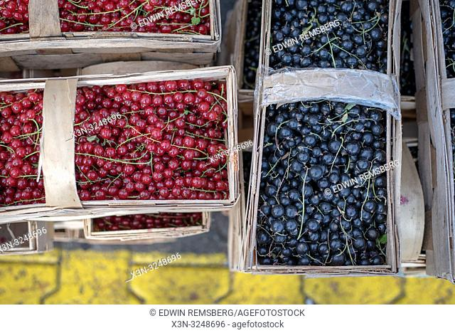 Overhead view of wooden pales full of cranberries (Vaccinium oxycoccos) and bilberries (Vaccinium myrtillus L. ) at the Bronisze Wholesale Market - one of the...