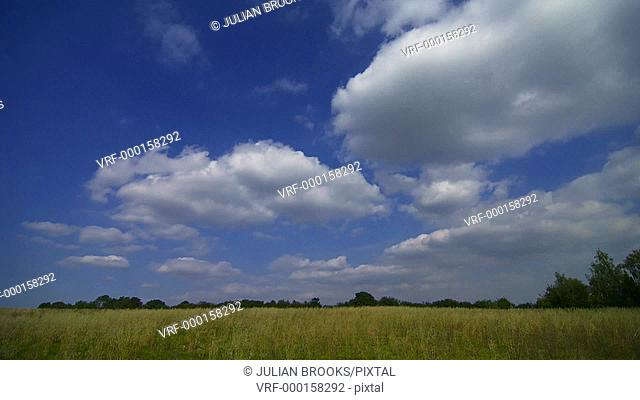 Time lapse clouds over a field of unripe wheat