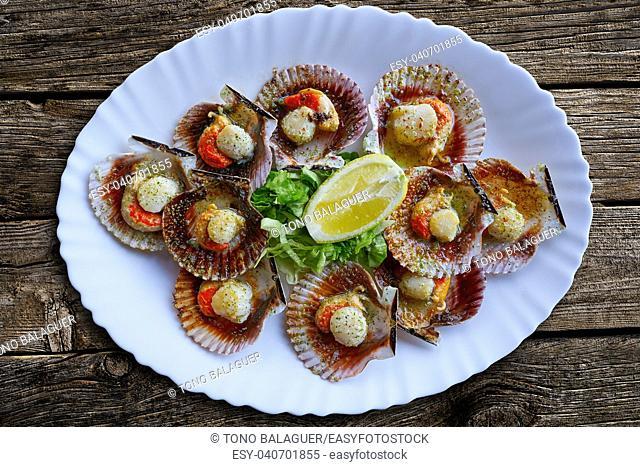 zamburinas scallops recipe typical from Galicia Spain
