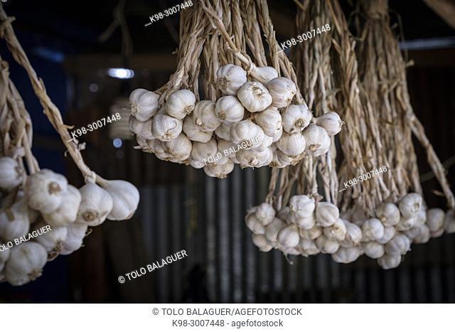 ajos, comercio de alimentacion y verduras, Lancetillo - La Parroquia, Franja Transversal del Norte , departamento de Quiché, Guatemala