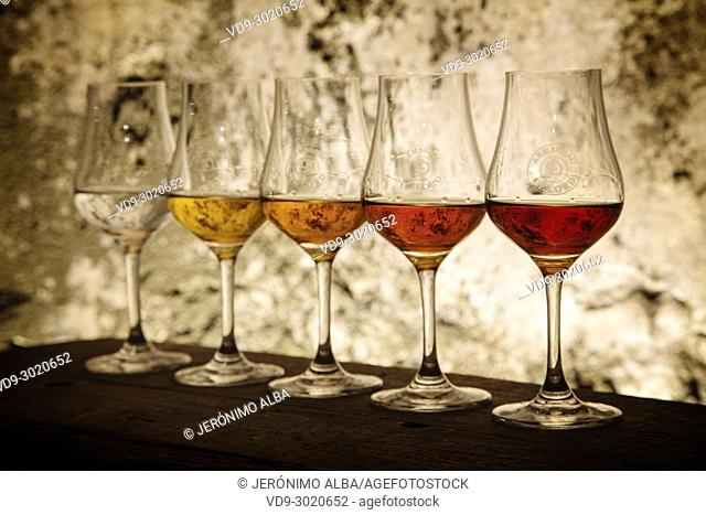 Glasses with armagnac from different years. Armagnac Delord cellar, Lannepax. Le Gers Department, New Aquitaine, Midi Pyerenees. France Europe