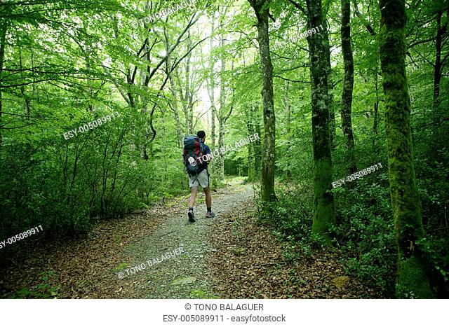 Adventure hiking on beech forest of Pyrenees