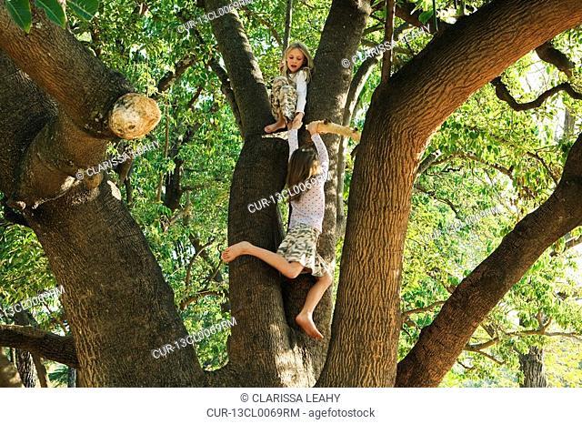 Girls playing in tree