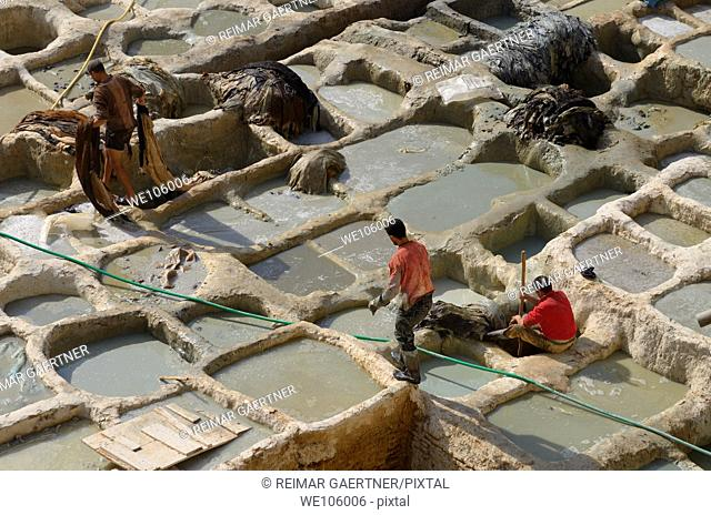 Workers at wet blue chrome tanning soaking vats at Fes Chouara Tannery Morocco