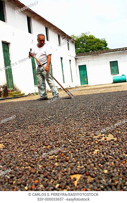 Coffee plantation works. Veracruz, Mexico