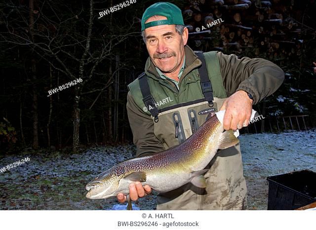 Marble trout (Salmo trutta), worker of a fish farm holding long rogner in hands