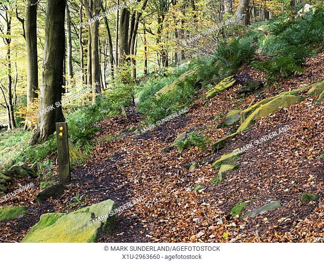 Footpath in Middle Dean Woods near Pecket Well Hebden Bridge West Yorkshire England