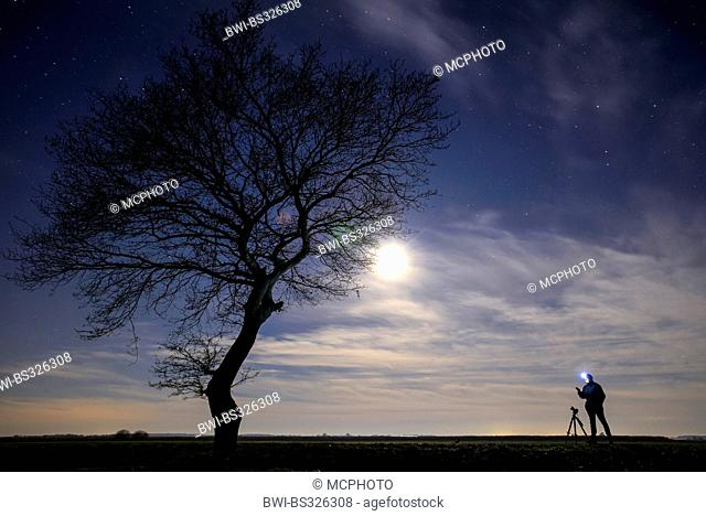 single tree and photographer in moonlight