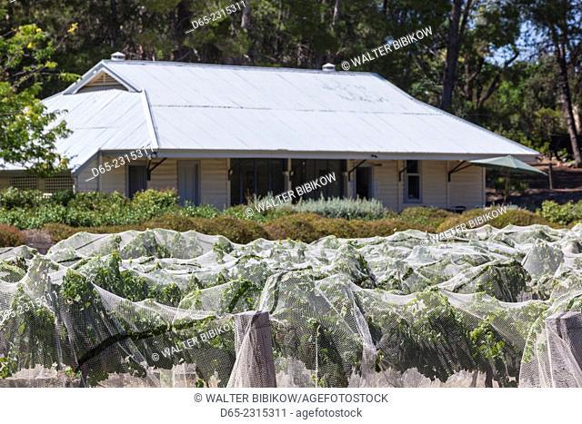 Australia, South Australia, Clare Valley, Auburn, mesh-fabric covered vineyard