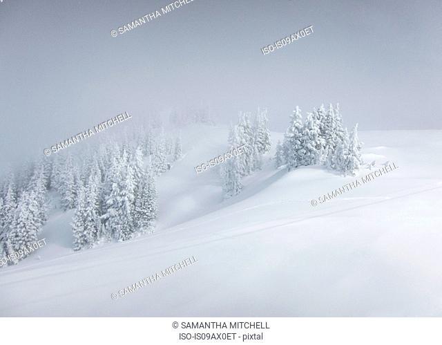 Snowy landscape, Utah, USA