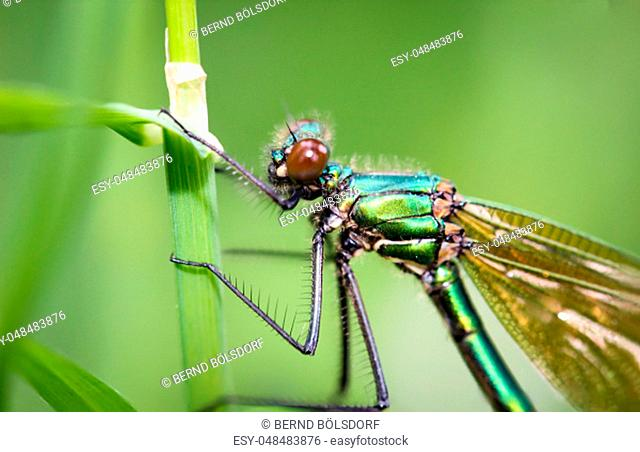 a dragonfly on a plant