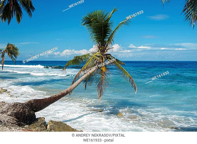 Tropical beach with coconut palm tree in sunny day. Fuvahmulah island, Indian Ocean, Maldives, Asia