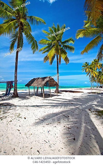 Jambiani beach  Zanzibar Island  Tanzania