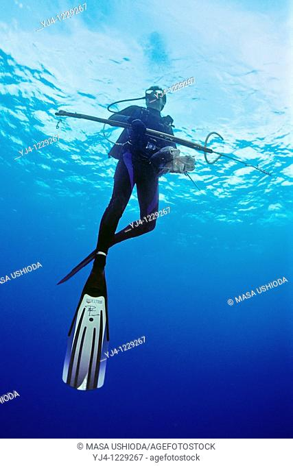 spearfisherman with good catches, off Tampa, Florida, USA, Gulf of Mexico, Caribbean Sea, Atlantic Ocean Not to be used for anti-spearfishing campaign
