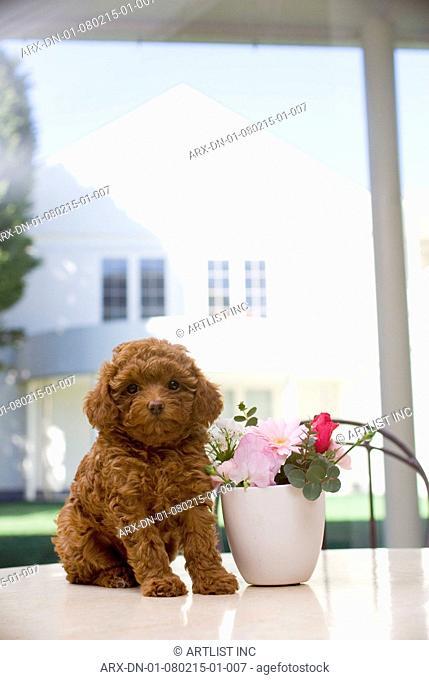 A puppy sitting by a flower pod
