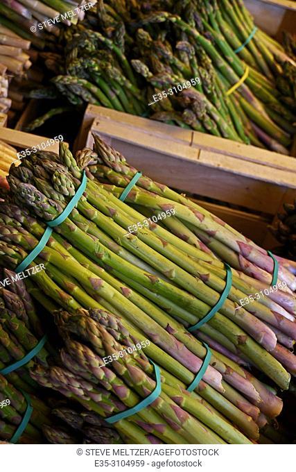 Fresh cut first asparagus of the season in Pezenas, France