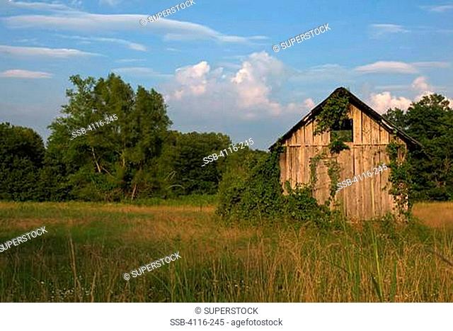 Abandoned shack in a field at dusk, Arkansas, USA