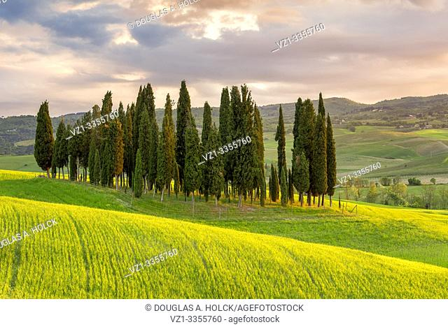 Sunset on Cypress Grove Val d'Orcia Tuscany Italy World Location