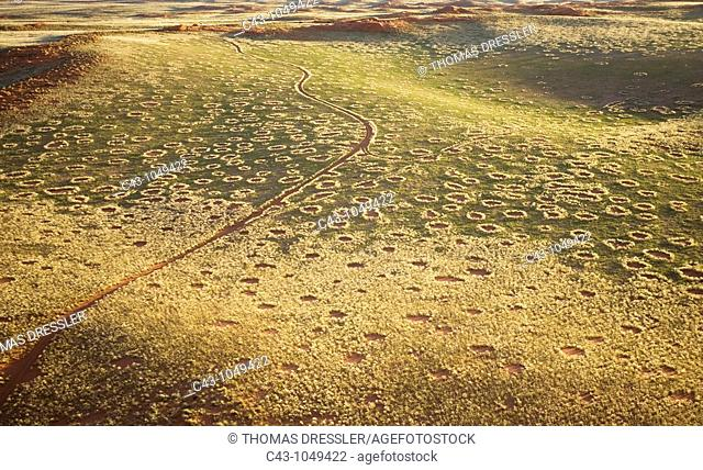 Namibia - The 'green' desert during the rainy season  The so-called 'Fairy Circles' are circular patches without any vegetation which according to recent...