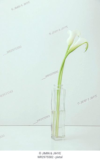 Flowers and plants in a glass vase