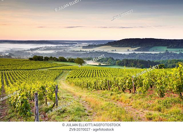 Vineyards near to Vezelay in Burgundy during a misty dawn