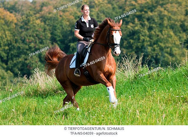 woman rides Hessian Warmblood