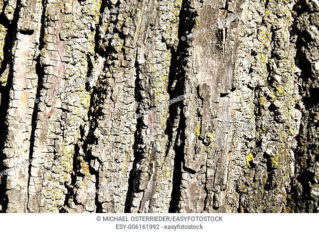Closeup of a Trees bark