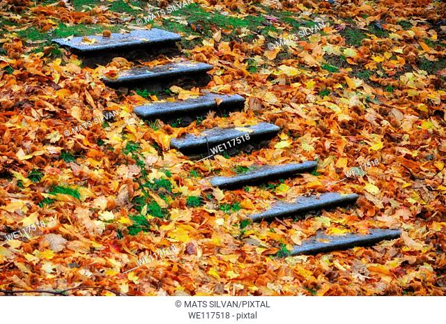 Stairs in the forest with autumn leaves