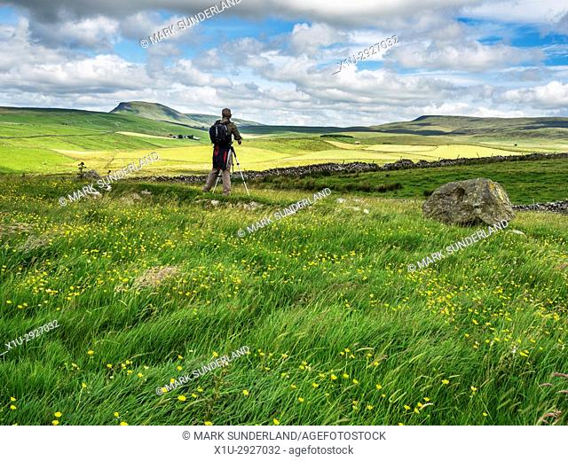 Photographer in a Buttercup Meadow near Stainforth Photographung Pen Y Ghent in the Distance Ribblesdale Yorkshire Dales England