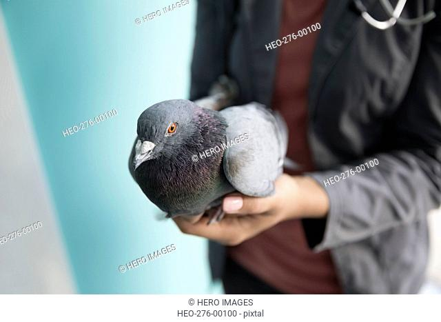 Veterinarian holding pigeon