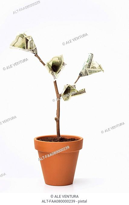One-hundered dollar bills growing on potted tree