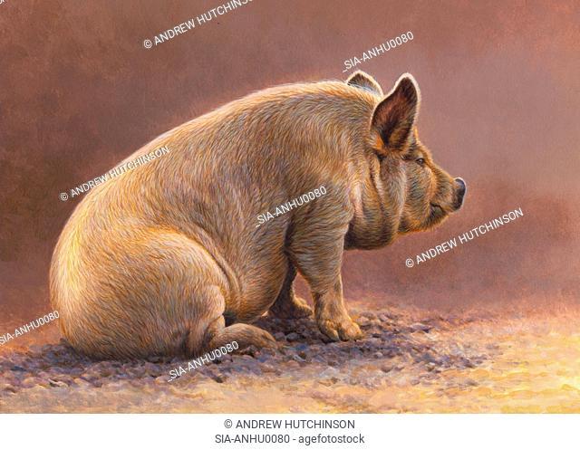 Pig sitting in pen