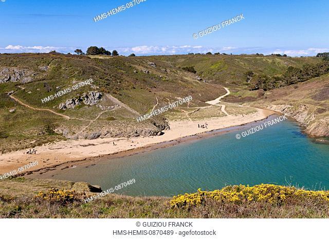 France, Morbihan, Belle Ile en Mer, the wild coast, along the GR340 between the Pointe des Poulains and Herlin beach (Bangor village), Herlin beach