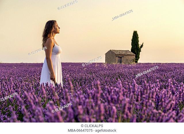 Woman at dawn in a lavender field. Plateau de Valensole, Alpes-de-Haute-Provence, Provence-Alpes-Cote d'Azur, France, Europe