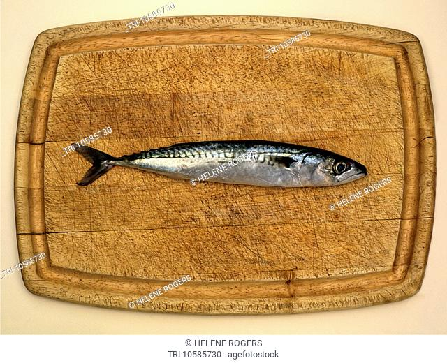 Mackerel Fish on Wooden Board
