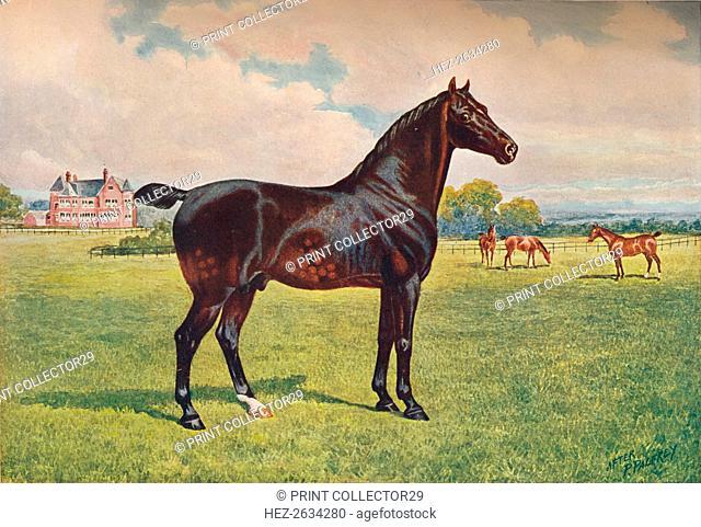 Hackney Pony stallion Berkeley Model, c1900 (c1910). Artist: Henry Powell Palfrey