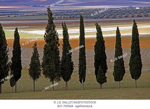 La Mancha landscape near Santa Cruz de Mudela. Ciudad Real. Spain