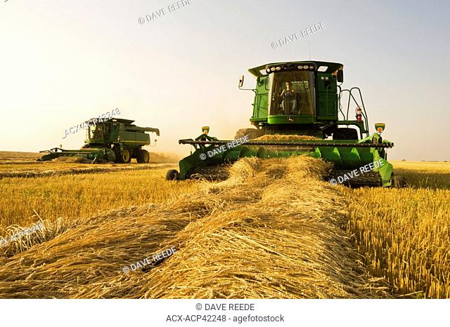 A woman operates a combine harvester during the spring wheat harvest near Somerset, Manitoba, Canada
