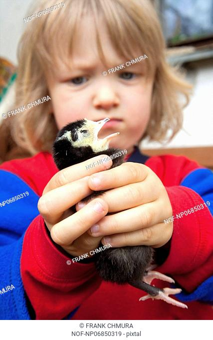 little boy carefully holding new born chick in his hands