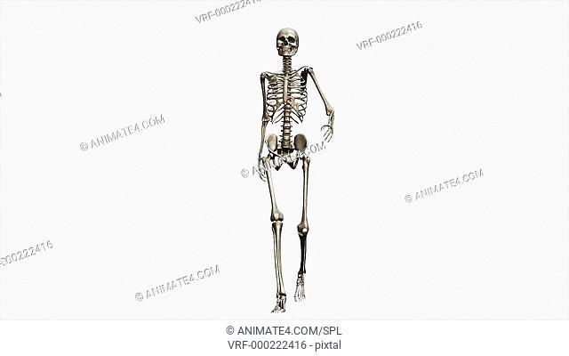 Female skeleton, walking