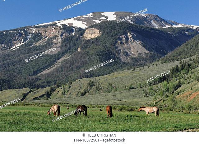 Horses on meadow, Red Rock Ranch, Guest Ranch, Bridger-Teton Wilderness, nature, Kelly, Wyoming, USA