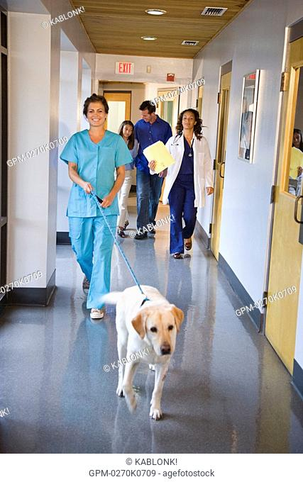 Veterinary assistant walking with dog down clinic corridor, with pet owners and veterinarian walking behind