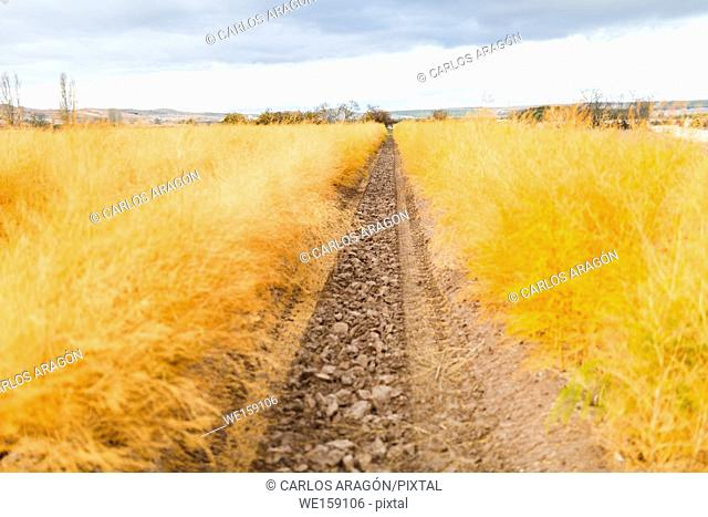 Agricultural field with the colors of autumn on asparagus field, a autumn day in Lodosa, Navarra, Spain