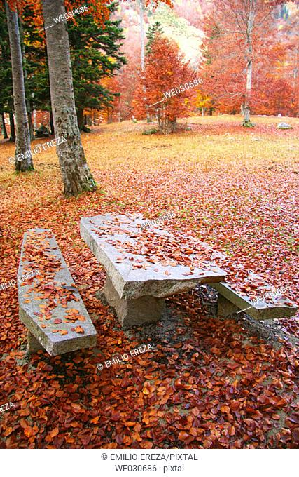 Picnic area in beechwood. Pyrenees Mountains region, Alta Ribagorça. Catalonia, Spain